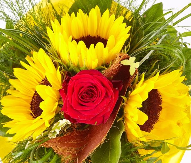 Sonnenblumen-Rose