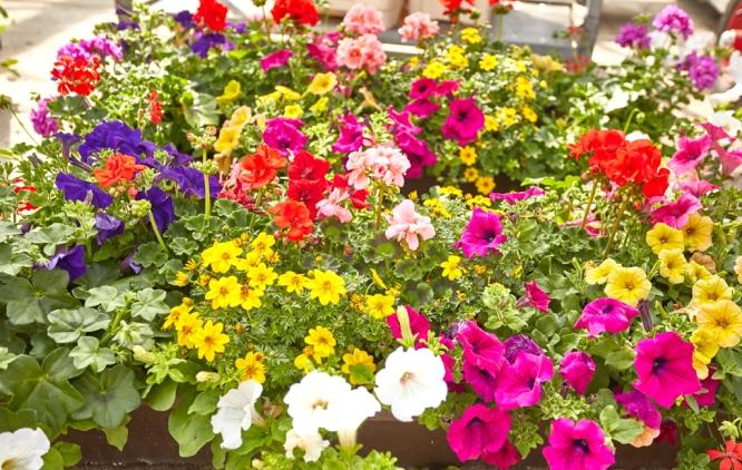 Blumenkisten-bepflanzt