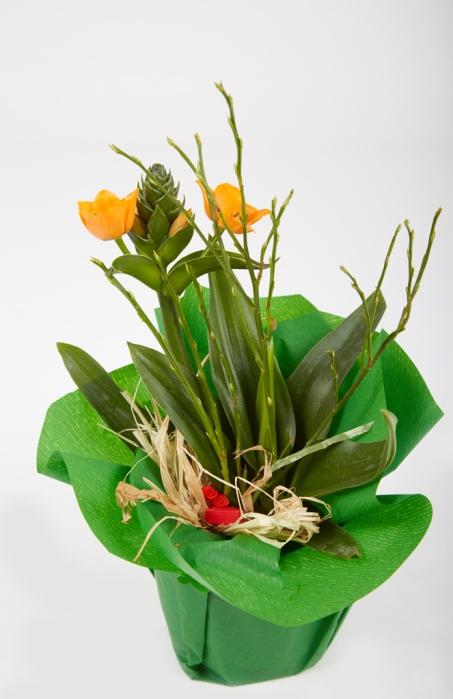 Topfpflanze-3