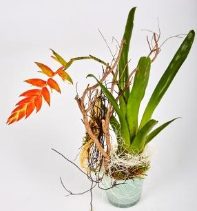 Topfpflanze-8